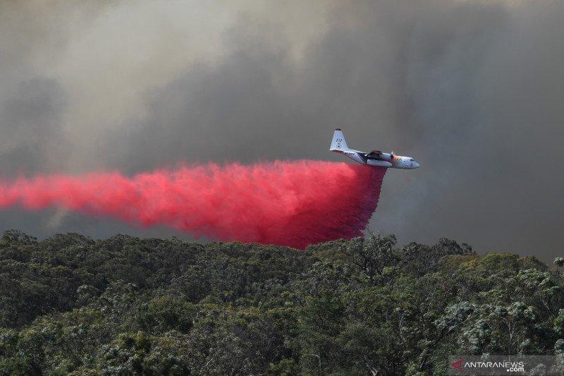 Kebakaran hutan  di sepanjang pesisir timur Australia