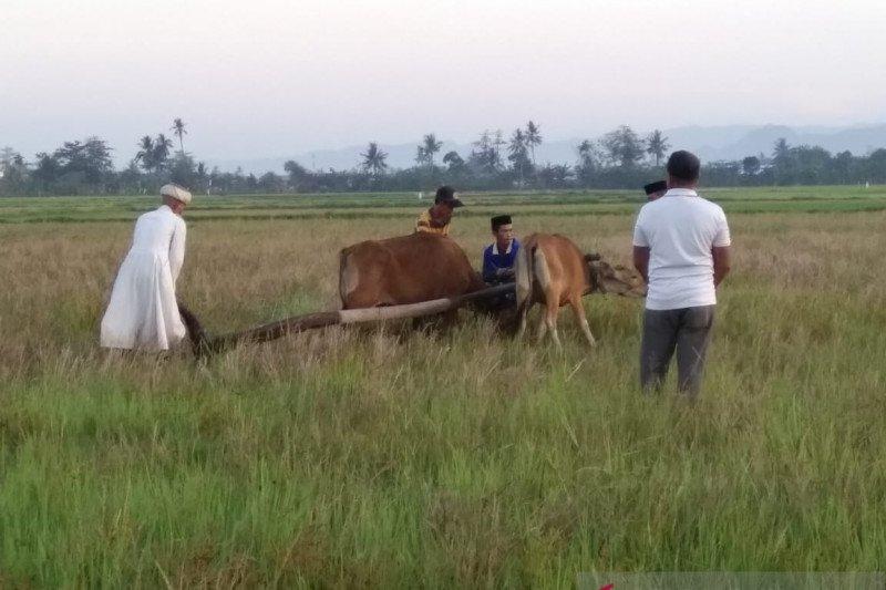 """Upacara adat """"Appalili"""" pertanda musim tanam di Kabupaten Maros"""