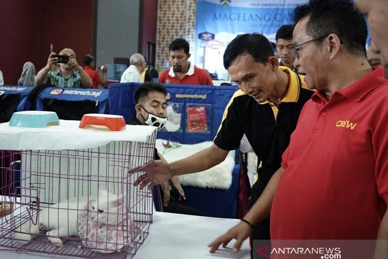 Diikuti 146 peserta, Magelang Cat Show 2019 hadirkan juri mancanegara