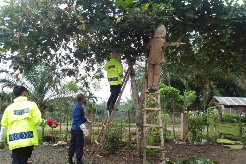 Ulat bulu serang Sekolah Dasar di Agam, siswa dipulangkan, 15 alami gatal-gatal