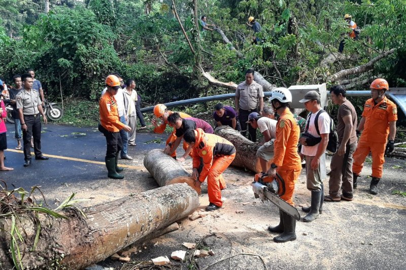 Pohon tumbang macetkan lalin 6,5 km di jalan by pass Manado-Bitung