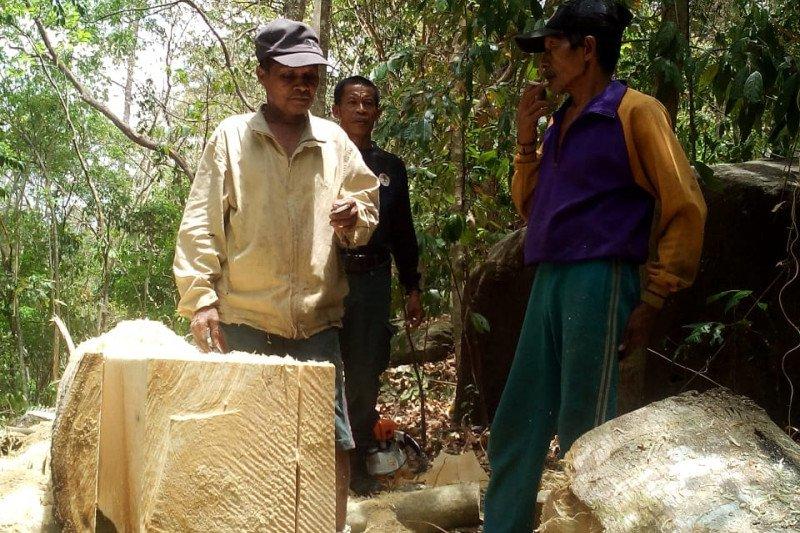Gakkum LHK Sulawesi serahkan tersangka perambah hutan ke Kejari Barru