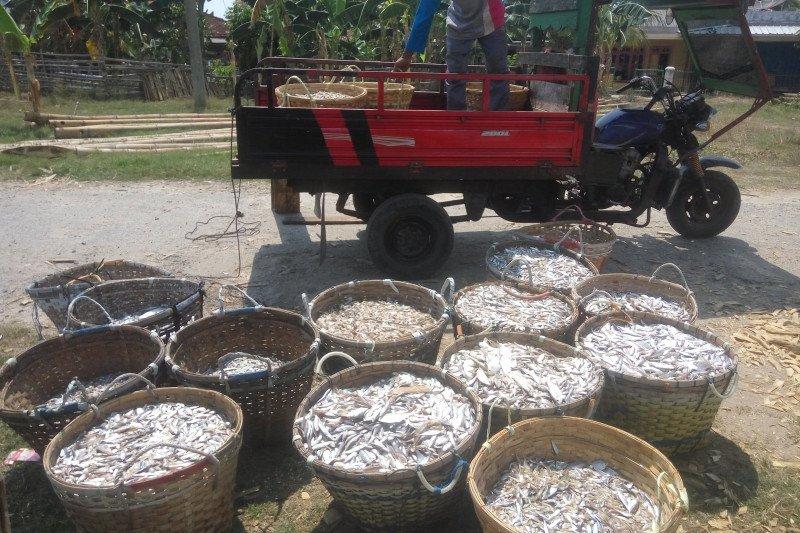 Geliat nelayan Lampung Timur menghadapi musim angin barat