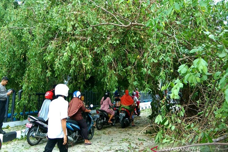Kejadian pohon menimpa warga jangan terulang, kata Ketua DPRD Seruyan