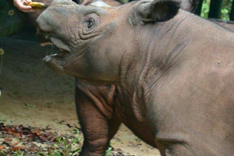 Wisata konservasi gajah Way Kambas makin berkembang