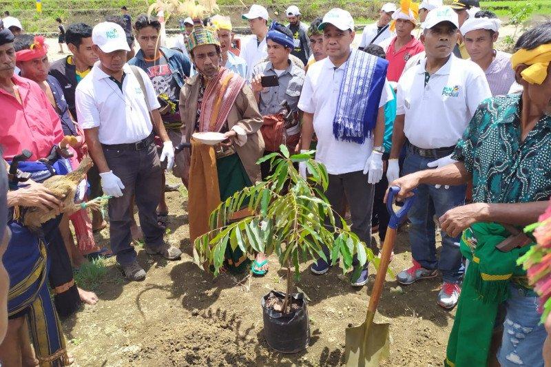 PLN NTT tanam 6.000 bibit pohon di Pulau Sumba
