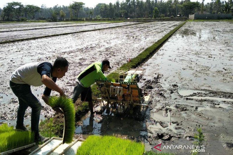 Kulon Progo mengembangkan pertanian organik seluas 200 hektare pada 2020