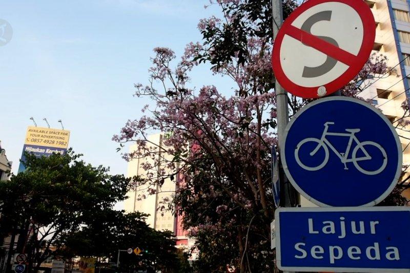 Warna-warni bunga tabebuya kembali bermekaran di Surabaya