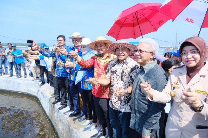 Menteri Kelautan dan Perikanan Optimistis kembalikan industri udang di Indonesia