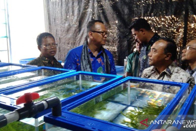 Menteri KKP Edhy Prabowo tangkap empat kapal