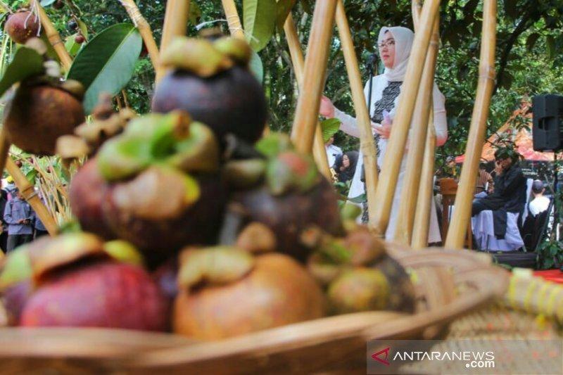 Pohon manggis tua harus dilestarikan, ini alasan Bupati Purwakarta