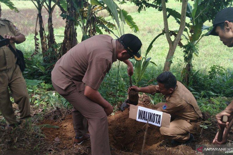 Payakumbuh fokus kembangkan tanaman hortikultura