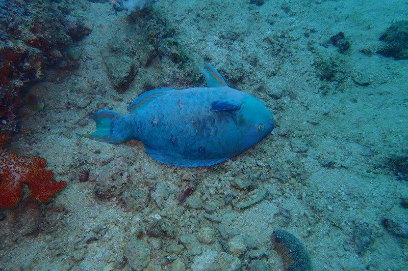 Tim pemantau temukan ikan-ikan mati di Teluk Triton, Papua Barat