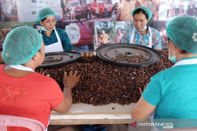 Kabupaten Jembrana miliki desa devisa sektor kakao