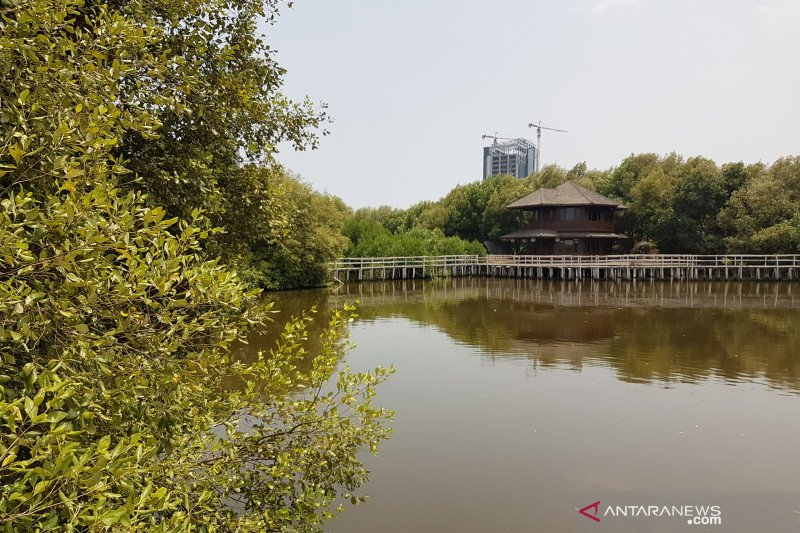 ANTARA guide to  mangrove resort in North Jakarta