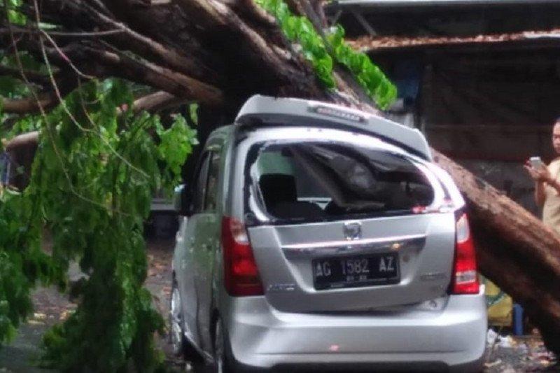 Sejumlah kendaraan di Kediri rusak tertimpa pohon