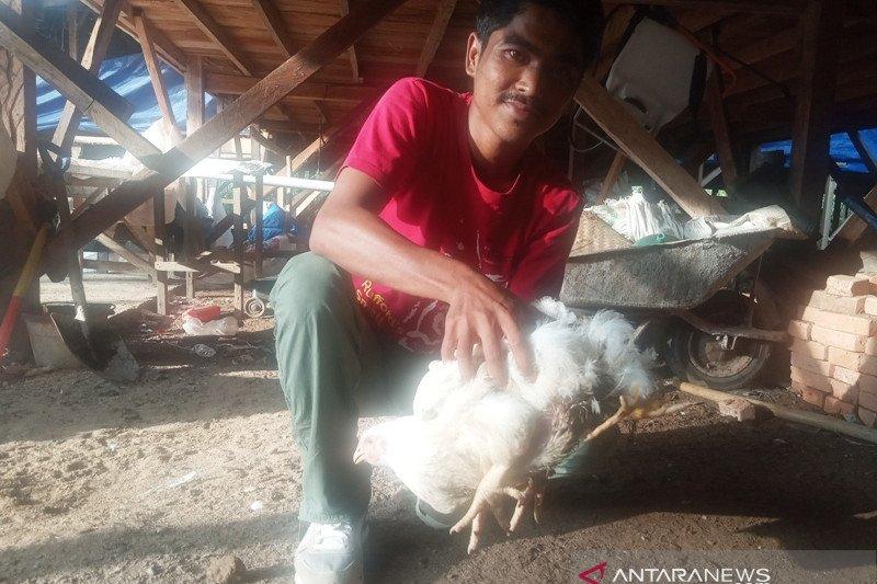 Ayam kaki empat di Agam ditawar Rp50 juta