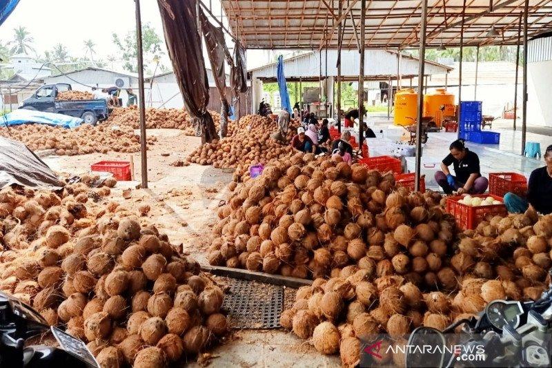 Pabrik minyak jadi harapan baru petani kelapa Kotim