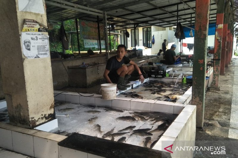 Petani ikan lele kesulitan memenuhi pesanan  pedagang