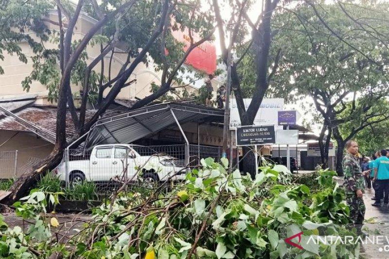 Enam warga Mataram terluka akibat pohon tumbang