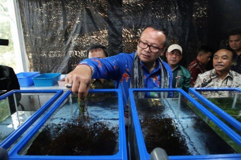 Menteri Edhy komitmen tingkatkan inovasi produk rumput laut