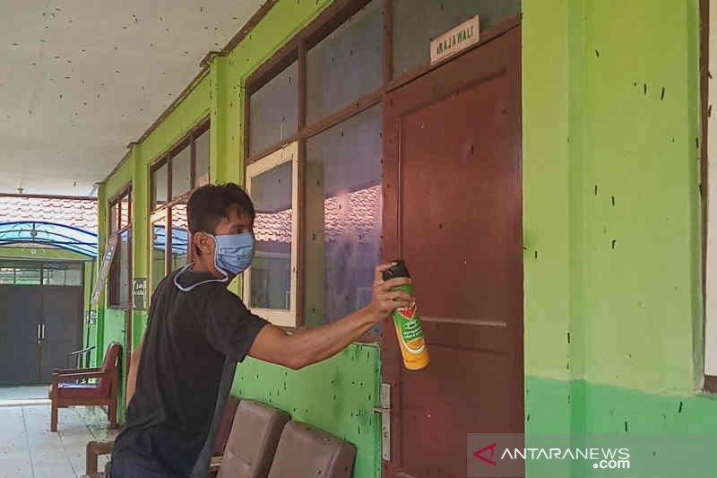Ulat bulu serbu satu Sekolah Luar Biasa di Cirebon