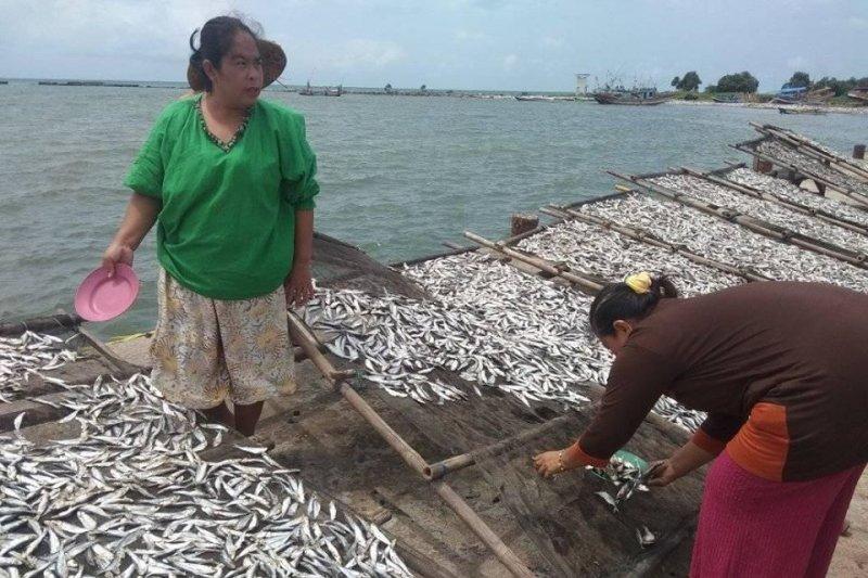 Setahun Pascatsunami Selat Sunda, tangkapan nelayan Pandeglang naik