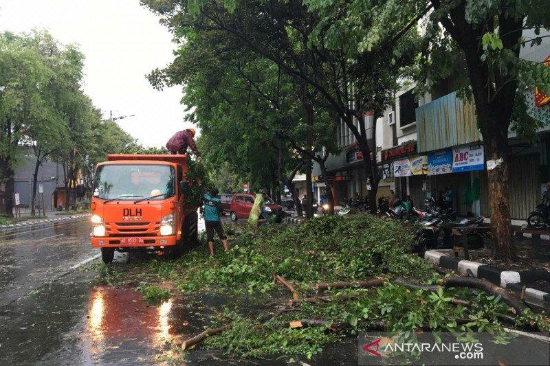 Petugas bersihkan pohon tumbang akibat puting beliung di Solo