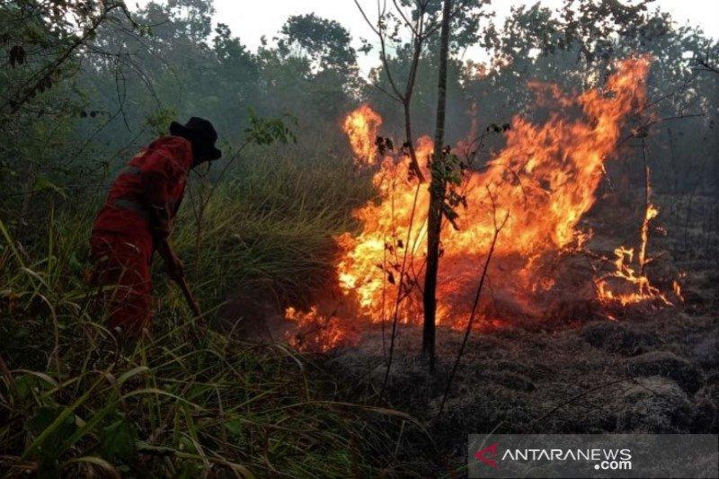 Kebakaran Hutan Produksi di Konawe