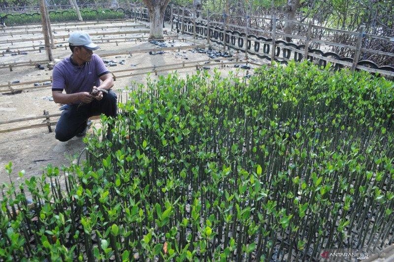 Menteri: Program padat karya sektor kelautan serap 4.600 tenaga kerja