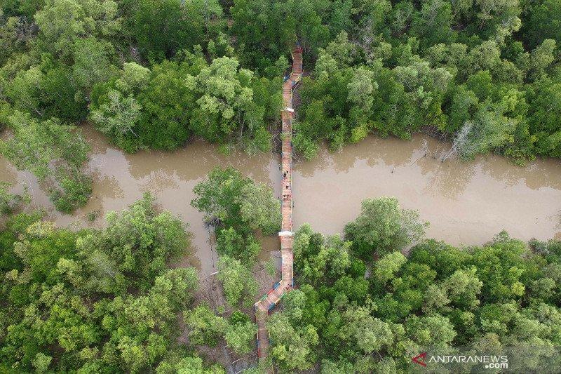 "Luhut undang Singapura masuk proyek mangrove hingga ""food estate"""