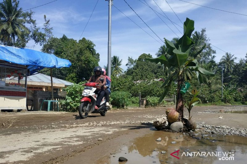 Protes jalan rusak tak kunjung diperbaiki, warga Padang Pariaman tanam pisang di jalan
