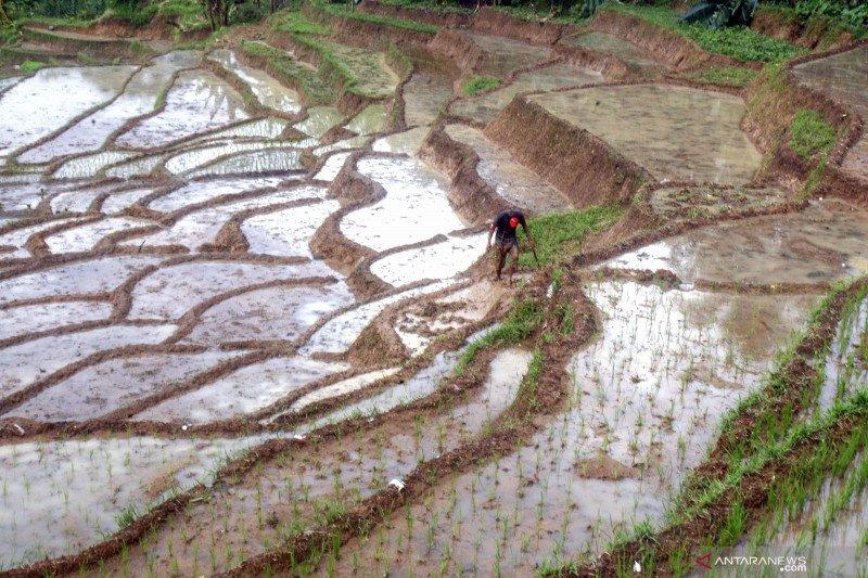 Serikat petani dukung penyiapan lahan terlantar untuk cetak sawah