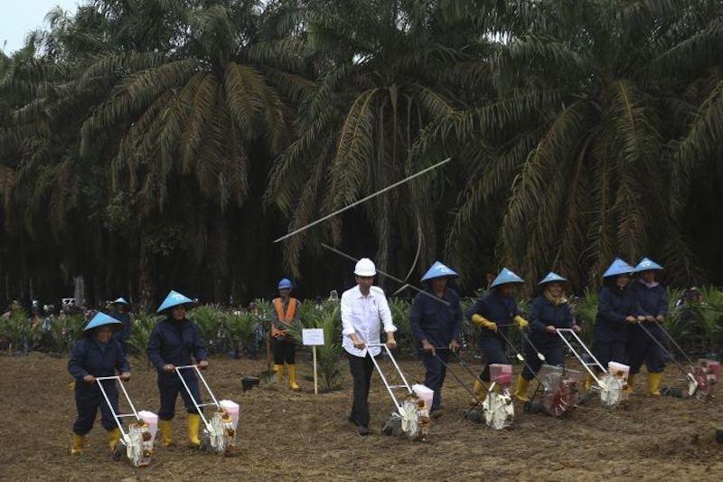 Sumatera Selatan remajakan lahan sawit terbanyak sejak 2017