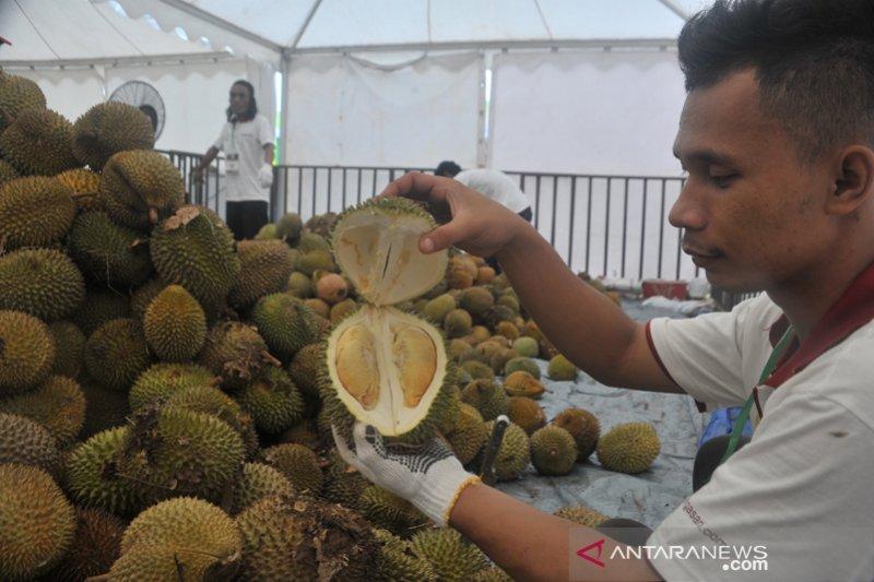 Pengunjung serbu makan durian sepuasnya
