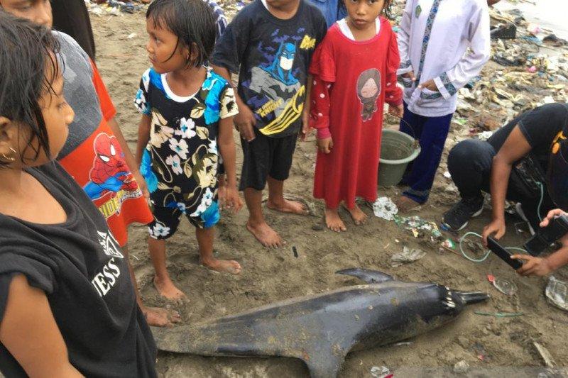 Lumba-lumba ditemukan warga terdampar di Pantai Padang