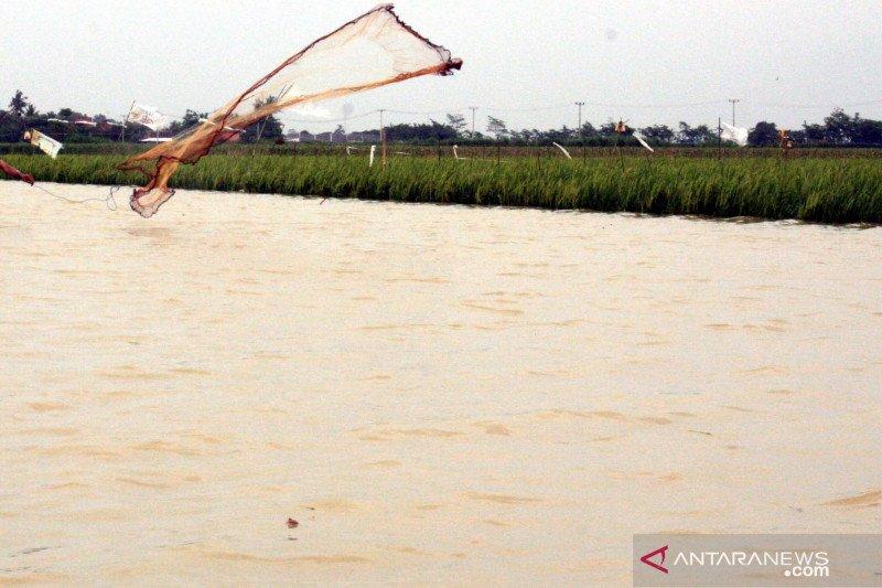 Distan Karawang ajukan bantuan ke Kementan untuk sawah terendam banjir