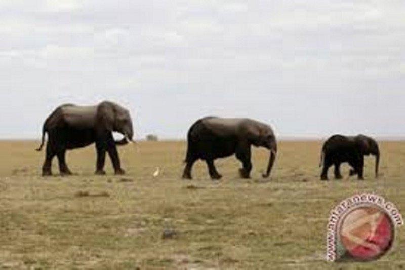Gajah ikut pawai beri penghormatan kepada korban kebakaran hutan Australia