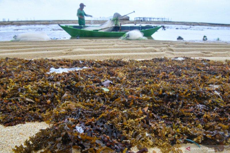Peneliti TII: Pengerahan nelayan Pantura berpotensi picu konflik horizontal