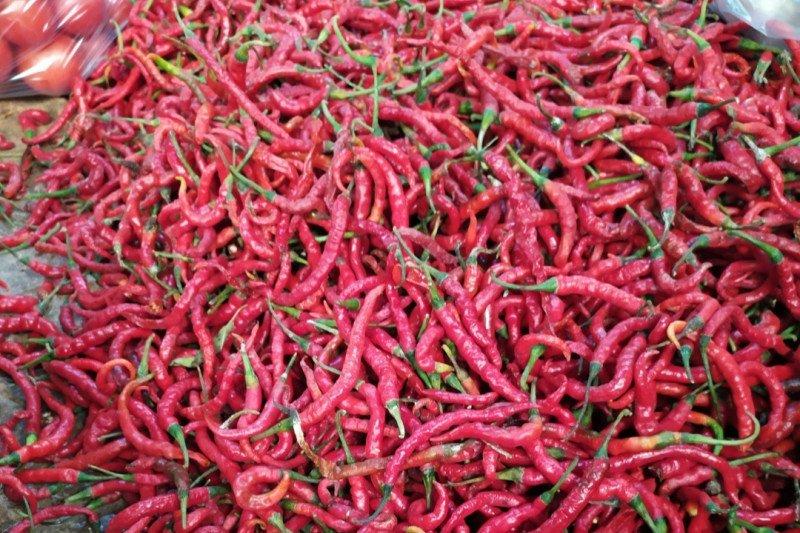 Stok terbatas,  harga cabai merah di Bandarlampung naik
