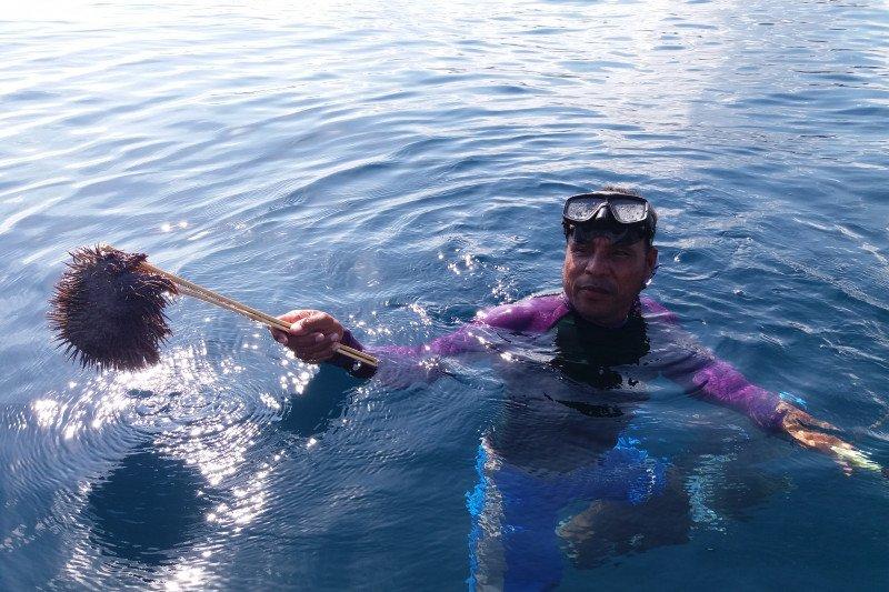 Bintang laut berduri ancaman  terumbu karang Raja Ampat