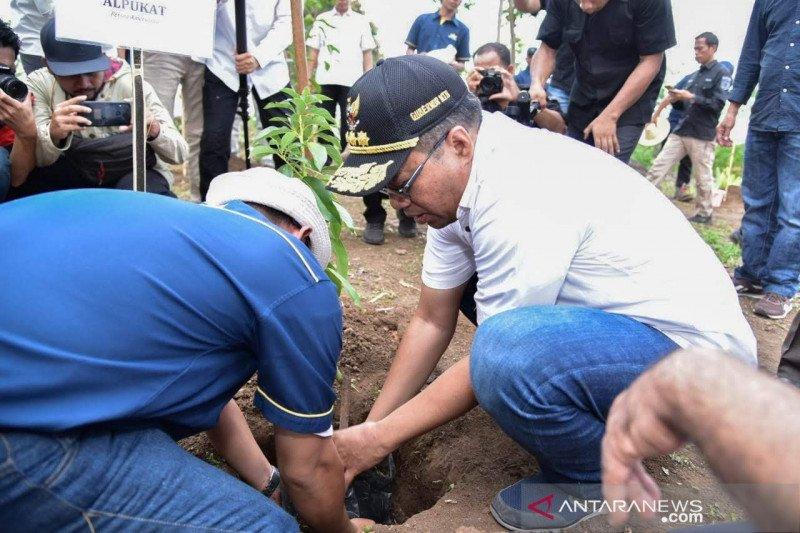 Gubernur NTB mengawali penanaman 6.035 pohon di Lombok Timur