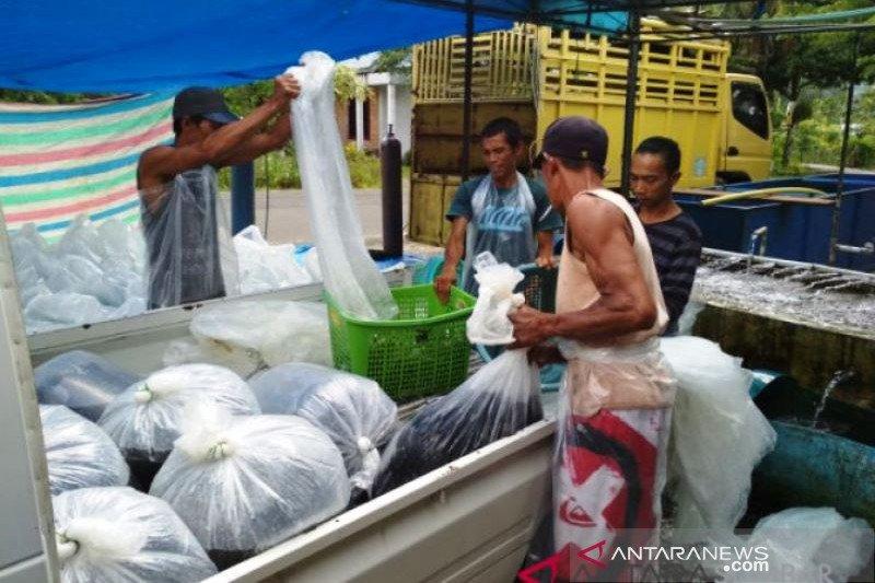 Produksi ikan air tawar di Agam berkurang 544,96 ton