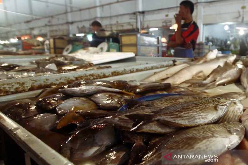 Harga ikan dingkis meningkat pesat saat Imlek