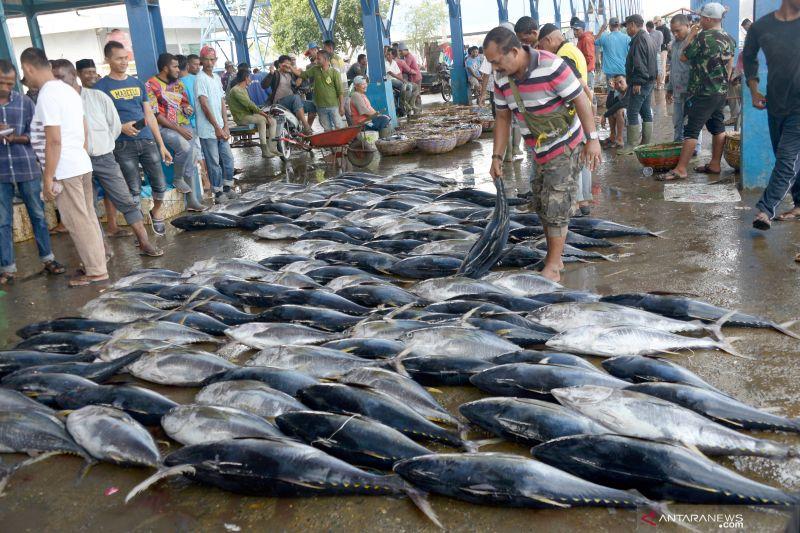 Tangkapan tuna sirip kuning meningkat