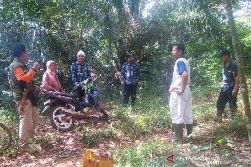 Orangutan di Kotawaringin Timur sering masuk ke kebun masyarakat