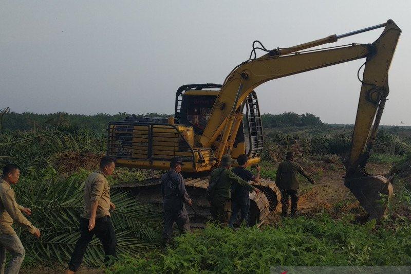 Potensi kerugian eksekusi perkebunan sawit Gondai Rp12,4 triliun