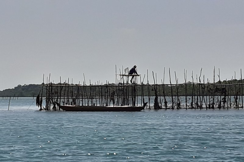 Ikan dingkis masih langka di Batam jelang Imlek
