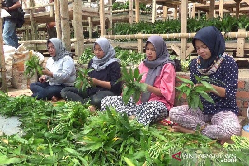 Permintaan ekspor tanaman potong dari Sukabumi meningkat
