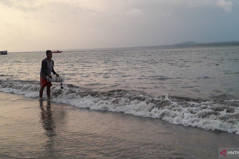 Petugas Bakamla TWNC lepaskan 30 ekor lobster ke laut